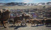 Chàng trai Việt đi săn cùng đại bàng giữa mùa đông Mông Cổ