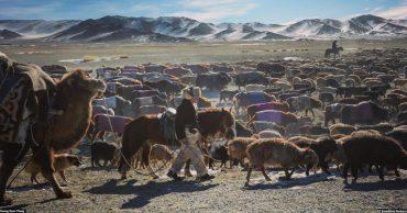Chàng trai Việt đi săn cùng đại bàng giữa mùa đông Mông Cổ post image