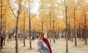 6 địa địa du lịch mùa thu Hàn Quốc đẹp đến trôi tim
