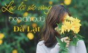 3 điểm lý tưởng khi đi du lịch Đà Lạt mùa hoa dã quỳ