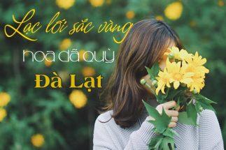 3 điểm lý tưởng khi đi du lịch Đà Lạt mùa hoa dã quỳ post image