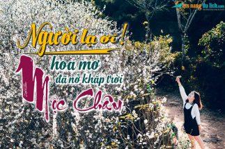 Du lịch Mộc Châu tháng 1 ngắm hoa mơ nở khắp đồi post image