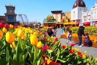 Không chỉ hoa anh đào, Hàn Quốc gây ấn tượng mạnh bởi hoa TuLip post image