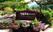 Bật mí khu vườn sẽ tổ chức lễ hội mùa xuân nổi tiếng ở Hàn Quốc