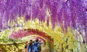 5 mùa hoa nhật định không thể bỏ lỡ khi đi du lịch Nhật Bản