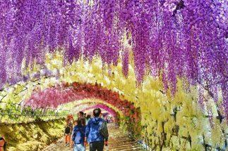 5 mùa hoa nhật định không thể bỏ lỡ khi đi du lịch Nhật Bản post image