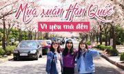 4 lý do bạn phải đi du lịch Hàn Quốc mùa xuân 1 lần trong đời