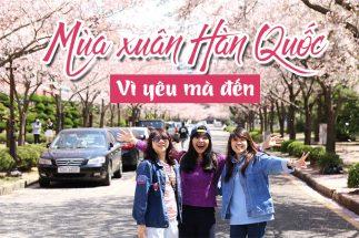 4 lý do bạn phải đi du lịch Hàn Quốc mùa xuân 1 lần trong đời post image