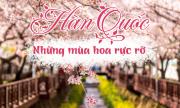 Dự báo 4 mùa hoa nở rợp trời mùa xuân Hàn Quốc
