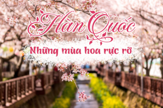 Dự báo 4 mùa hoa nở rợp trời mùa xuân Hàn Quốc post image