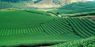 Du lịch Mộc Châu những điểm du lịch hấp dẫn du khách