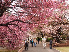 Du lịch Nhật Bản tự túc post image