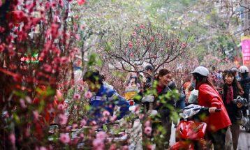 chợ hoa đào ngày tết