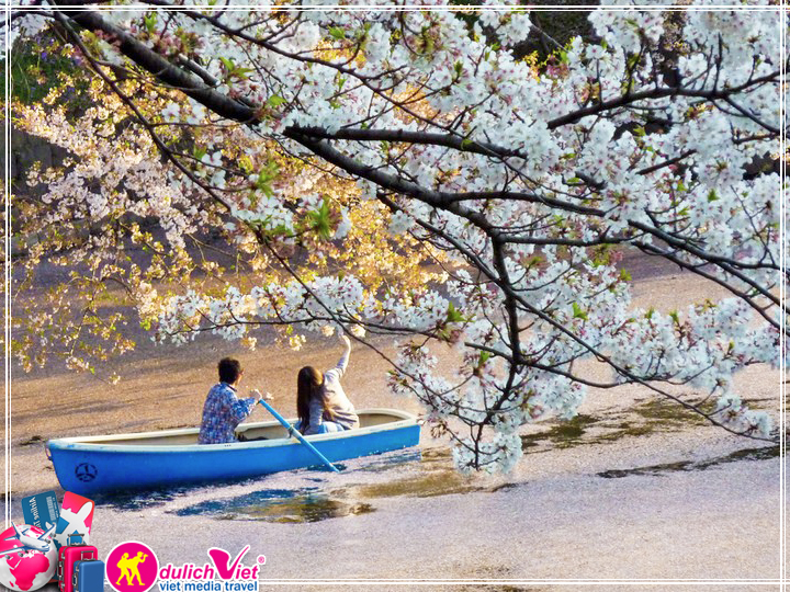Hình ảnh hoa anh đào Nhật Bản nét đẹp tinh tế post image