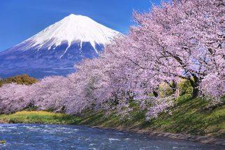 Ngỡ ngàng trước mùa hoa anh đào Nhật Bản đẹp đến nao lòng post image