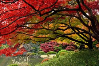 Tổng hợp kinh nghiệm du lịch Nhật Bản tự túc từ A – Z post image