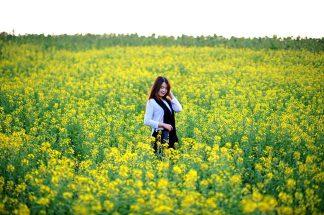 Hoa cải vàng mùa hoa Đào Sapa