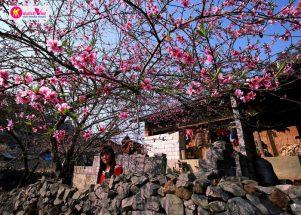 Những hình ảnh xinh đẹp của mùa hoa Đào Sapa post image