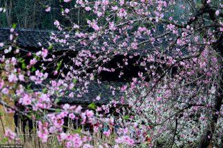 Du lịch Sapa mùa hoa Đào ăn gì và ở đâu? post image