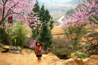 kinh nghiệm đi du lịch sapa mùa hoa đào