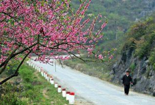 mùa hoa đào sapa ở tây bắc