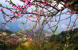 Tour Sapa mùa hoa Đào có điểm gì nổi bật? post image