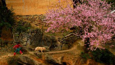 mùa hoa đào tây bắc