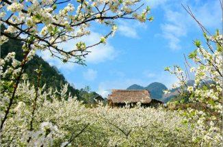 tour sapa mùa hoa đào nổi bật với những loài hoa nào