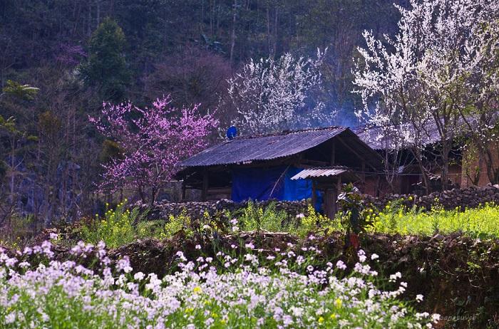 tour sapa mùa hoa đào xuân